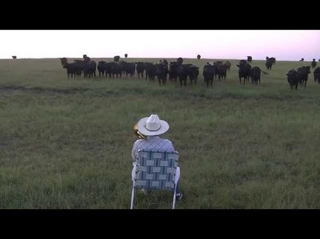 """Man Summons Cow Army By Playing """"Royals"""" On His Trombone   Strange days indeed...   Scoop.it"""