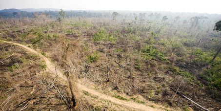 La déforestation a augmenté en Amazonie en 2013 | Theo Bcn | Scoop.it