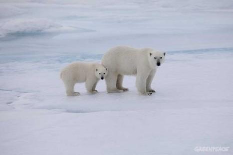 The dangers of Arctic oil   Alaska   Scoop.it