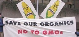 Organic Lobby Attacks Biotech Advances, Obscures Own Sustainability And Nutrition Doubletalk | Grain du Coteau : News ( corn maize ethanol DDG soybean soymeal wheat livestock beef pigs canadian dollar) | Scoop.it