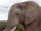 Beer made from elephant dung 'sells out in minutes' - Digital Spy | In Today's News of the Weird | Scoop.it