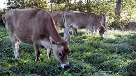 Fresh Research Finds Organic Milk Packs In Omega-3s   KCUR   ecoiko nature environment   Scoop.it