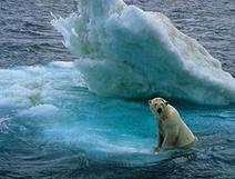 Sabias qué el lugar mas frio de la tierra no queda en el Polo Norte?   Era del conocimiento   Scoop.it
