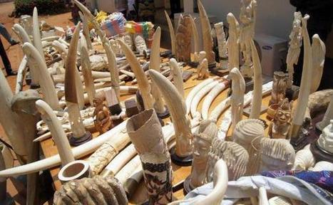 Le Togo intensifie la répression contre le trafic d'ivoire | Autres Vérités | Scoop.it
