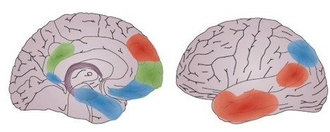 brain-regions | the NeuRA blog | Social Neuroscience Advances | Scoop.it