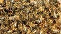 Scots bees' survival rates warning | A Sense of the Ridiculous | Scoop.it