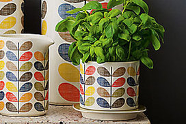 How to grow herbs in your home - The Canberra Times | herbs | Scoop.it