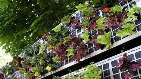 Cultiver un jardin urbain sur un mur végétalisé | Phare Ouest | ICI Radio-Canada Première | ville et jardin | Scoop.it