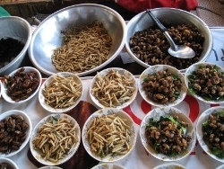 Opinion: Bugs can solve food crisis   The Scientist Magazine®   Entomophagy: Edible Insects and the Future of Food   Scoop.it