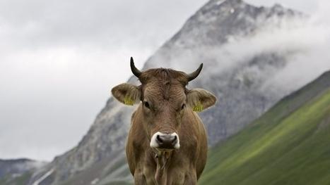 [Suisse] De la viande bio a été contaminée à la dioxine | Toxique, soyons vigilant ! | Scoop.it