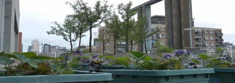 L'urbavideo du mercredi #11 : Montréal : l'agriculture urbaine | Urbamedia | (Culture)s (Urbaine)s | Scoop.it