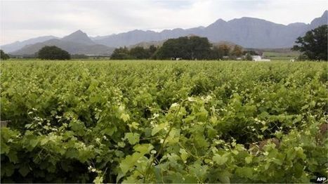 South Africa approves land expropriation bill - BBC News | Convincingly Contrarian Crumbs | Scoop.it
