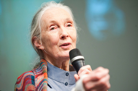 Watch the Video That Made Jane Goodall Speak Out Against Factory Farming!   animal rights   Scoop.it