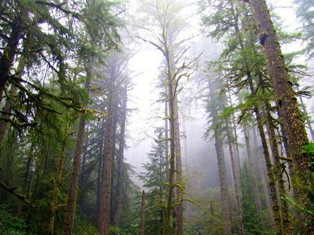$220.8 million price tag put on Elliott State Forest | Timberland Investment | Scoop.it