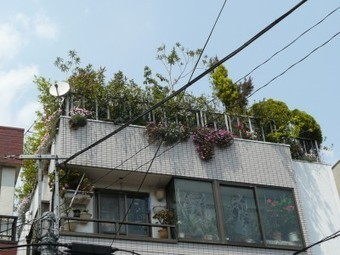 Urban Farming Takes Root in Tokyo | Urban Food Production | Scoop.it