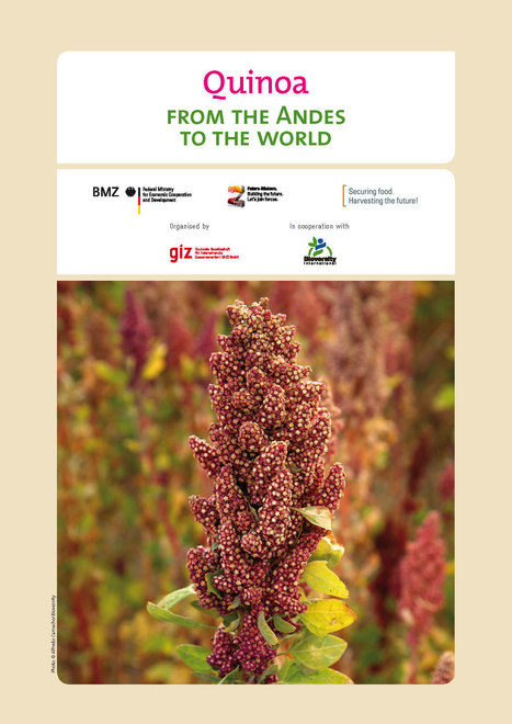 GIZ info note: All about quinoa | International aid trends from a Belgian perspective | Scoop.it