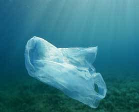 Great Lakes Filled With Plastic Bits : Discovery News | Farming, Forests, Water, Fishing and Environment | Scoop.it