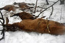 Froid? Pollution? Des animaux morts par milliers, l'hécatombe continue!   Toxique, soyons vigilant !   Scoop.it