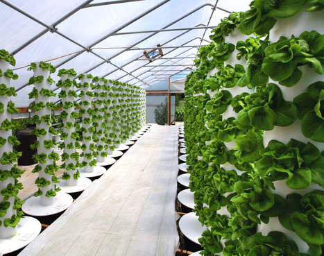 Amish Hydroponics Farm Leads The Way to Local Food Security in Indiana | Technological Decentral Abundance (TDA) | Scoop.it