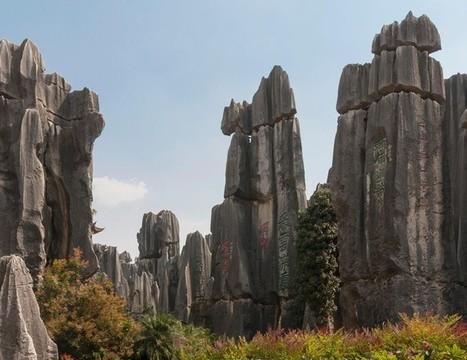 Au cœur des forêts mystérieuses du monde | The Blog's Revue by OlivierSC | Scoop.it