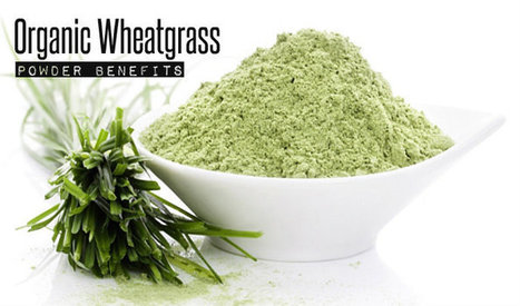 Organic Wheatgrass Powder Benefits   At Home Health and Beauty Tips   Scoop.it