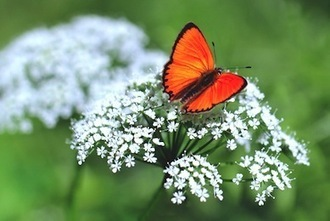 Vicious Cycle Links Loss of Pollinators to Diminishing Grasslands | EcoWatch | Scoop.it