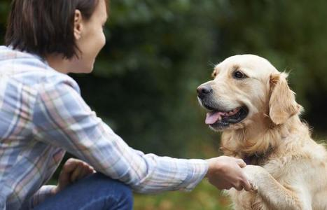 ¿Sabes cómo los perros reconocen nuestras caras? | Personas y Animales | Scoop.it
