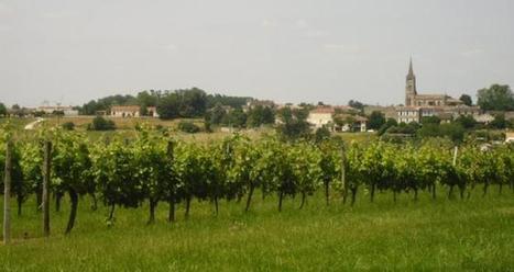 Vente de vignobles: vers un marché déséquilibré   mon-ViTi   Le vin quotidien   Scoop.it