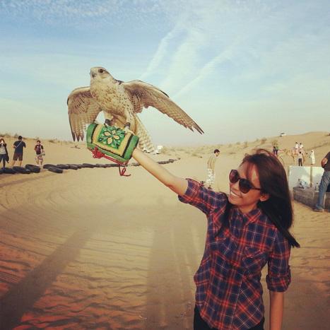 Week 2 - Falcon | National Bird of the UAE | findmeabreak | Scoop.it