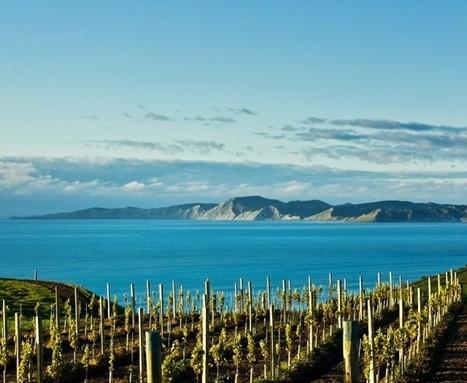 Marlborough wineries hit by earthquake | Autour du vin | Scoop.it