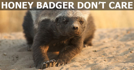 In Addition to Not Caring, Honey Badgers are Also Quite Clever | Xposed | Scoop.it