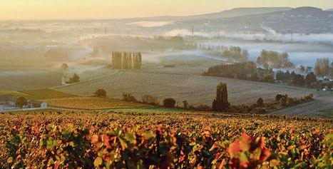 La vigne française obligée de s'adapter aux bouleversements climatiques | Vinideal - A la recherche de votre Vin Idéal ! www.vinideal.com | Scoop.it