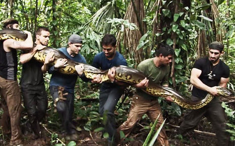Man to be eaten alive by anaconda in Discovery special   EW.com   Xposed   Scoop.it