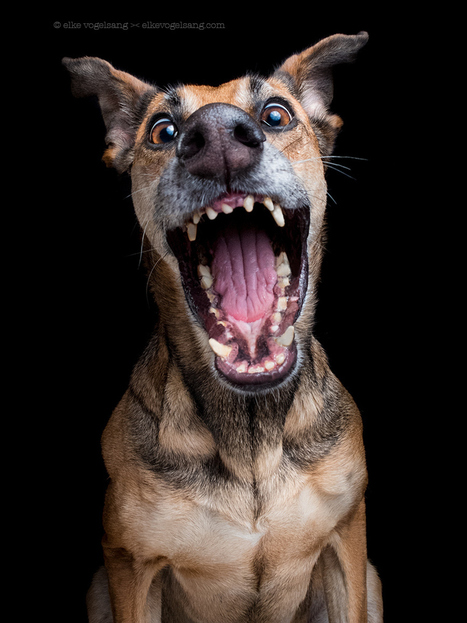 """""""Ooh, my Dooog!!"""" by Elke Vogelsang 