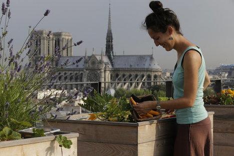 10 bonnes raisons de cultiver des fruits et des légumes en ville | Ressources & Documentation | Scoop.it