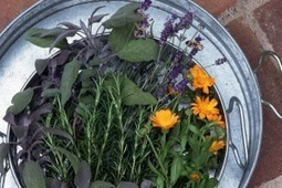 How Fresh Herbs Will Change Your Life   Luxury Lifestyle Magazine. Eat Love Savor   Aromatherapy   Scoop.it
