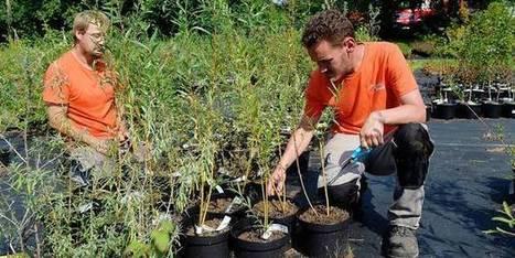 Une campagne pour promouvoir l'agriculture urbaine | Innovation sociale | Scoop.it