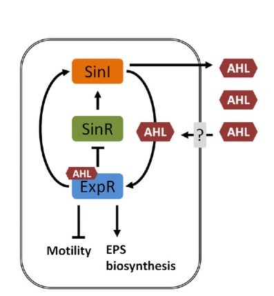 Rhizobial homologs of the fatty acid transporter FadL facilitate perception of long-chain acyl-homoserine lactone signals | Genetics of agriculturally significant micro organisms. | Scoop.it