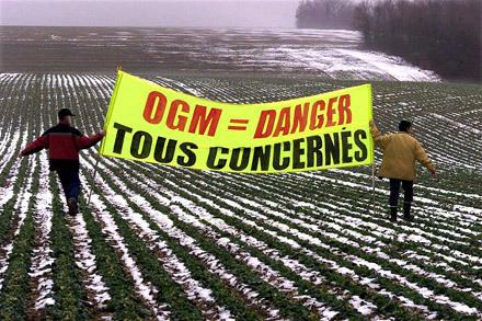 130 organisations veulent interdire le maïs OGM | Shabba's news | Scoop.it