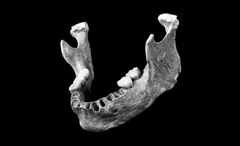 El análisis de una mandíbula fósil hallada en Rumanía ofrece evidencia de hibridación entre 'Homo sapiens' y neandertales en Europa | Educacion, ecologia y TIC | Scoop.it