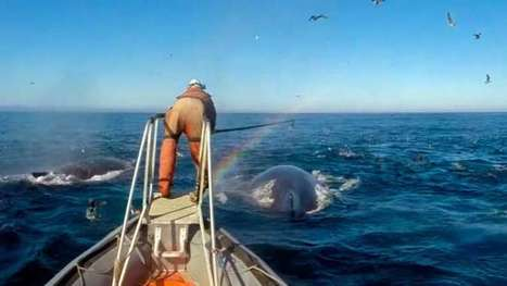 Researchers reveal details about the unique feeding habits of whales | Oceans and Wildlife | Scoop.it