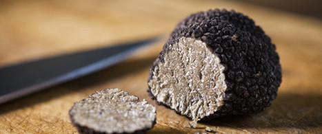 Le Marche do it better: The True Taste Of Truffles | Le Marche and Food | Scoop.it
