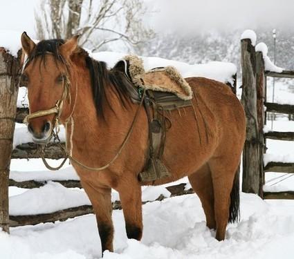 Attractive And Branded Horse Gear Online For Genuine Horse Lovers | OnlineEquestrianShop in Australia | Scoop.it