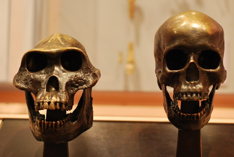 The Way You Walk is Tied to a Hole in Your Skull | Paleoanthropology news | Scoop.it