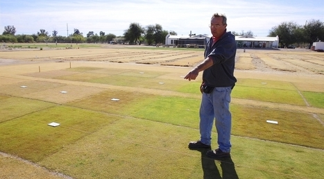 With UA Grass, Golf Courses Could See Two Kinds of Green | UANews | CALS in the News | Scoop.it
