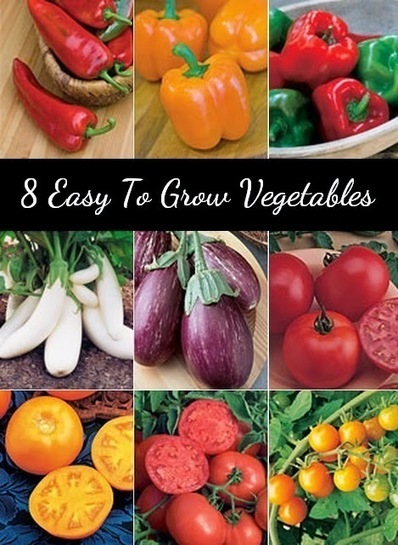 8 Easy to Grow Vegetables #Organic_Gardening | World In Green | Scoop.it