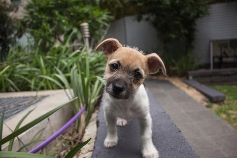 Keine Heimtiere aus dem Urlaub mit nach Hause bringen | ʕ·͡ᴥ·ʔ Welpenkauf Informationen | Scoop.it
