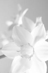 Mademoiselle Grenade - Des goûts et des couleurs : Le Blanc | Fashion & Style (Mode, tendances et styles) | Scoop.it