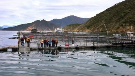 Salmon farms open | Global Aquaculture News & Events | Scoop.it