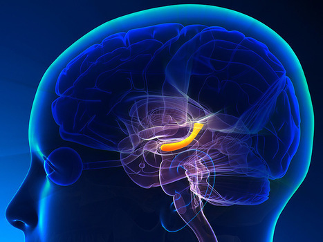 Memory Capacity of the Brain Is 10 Times More Than Previously Thought   Human Insight   Scoop.it